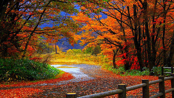 An autumnal road, with leaves falling.