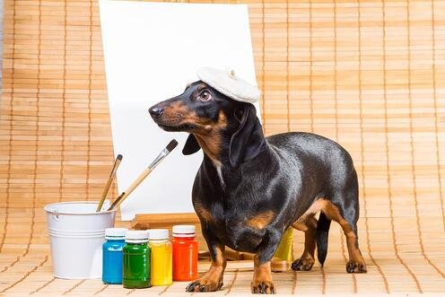 A dog, wearing a beret, tries to paint a canvas.