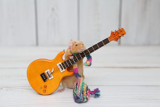 A mouse or guinea pig plays guitar while wearing a homemade scarf.