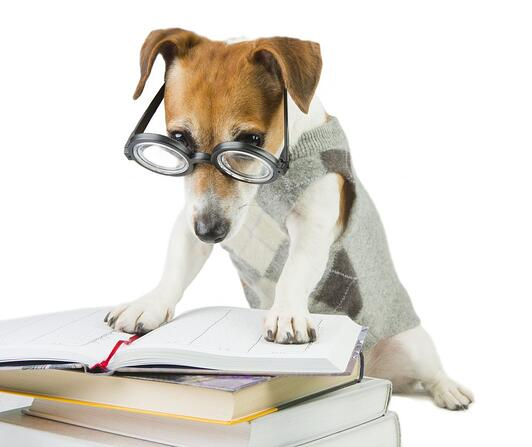 A dog wearing glasses and a sweater vest reads a few textbooks.