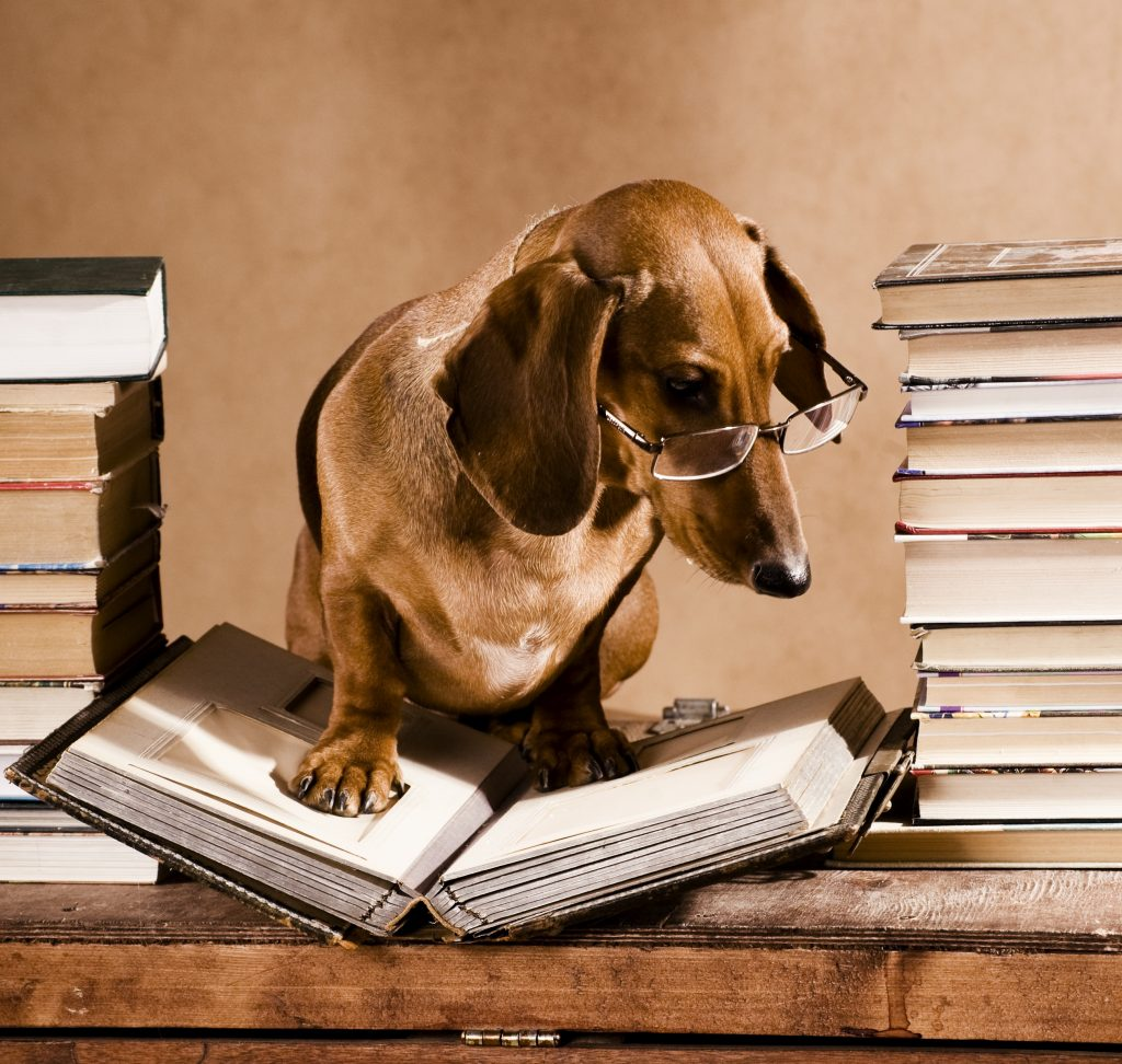 A different dog reads books, with glasses on and a bunch of other books around him/her